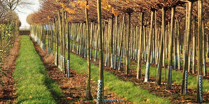 Tree Planting In Denver North Carolina